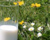 Proteine e massa muscolare: latte promosso